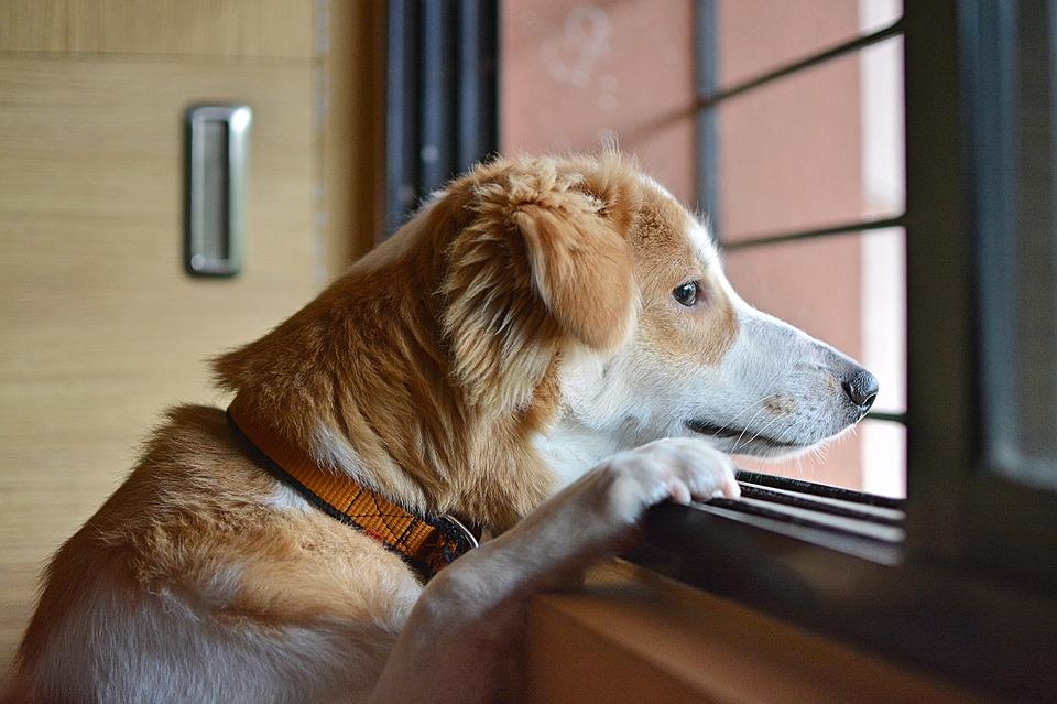 perro-soledad