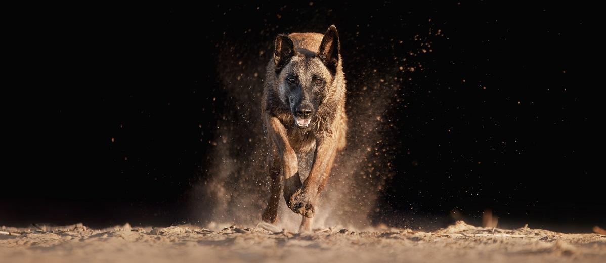 Formas de ayudar a los perros abandonados
