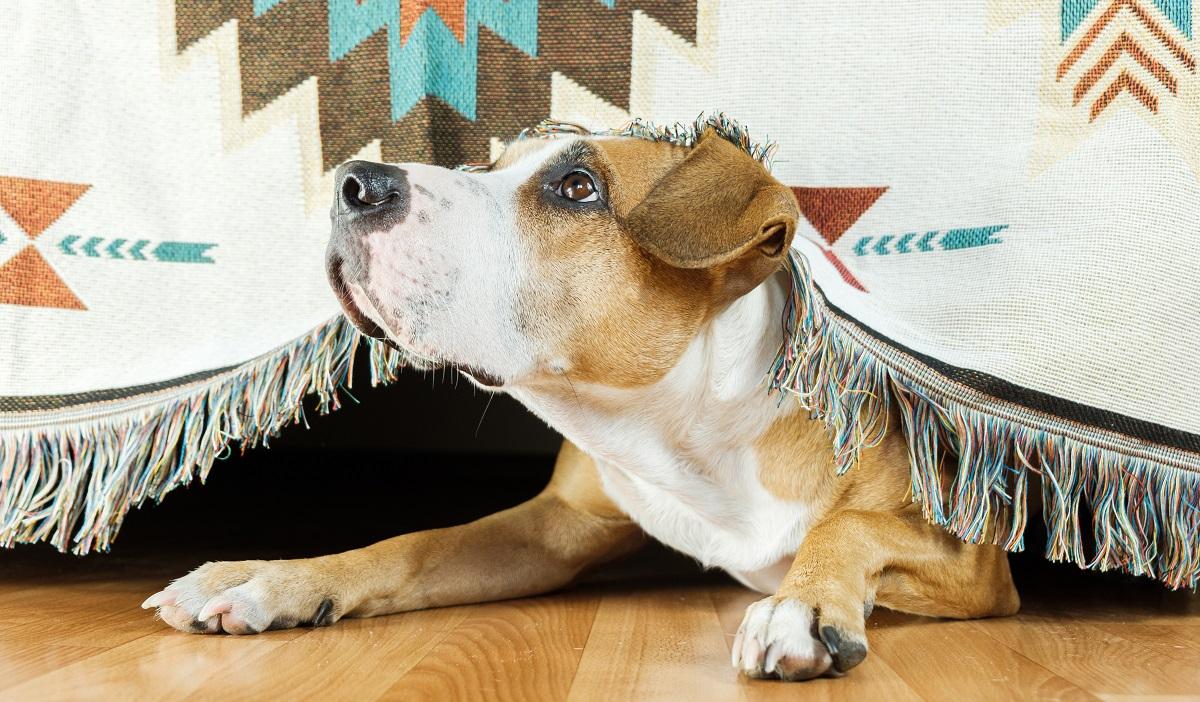 Perro escondido debajo del sofá. Inseguridad. Perros solos en casa.