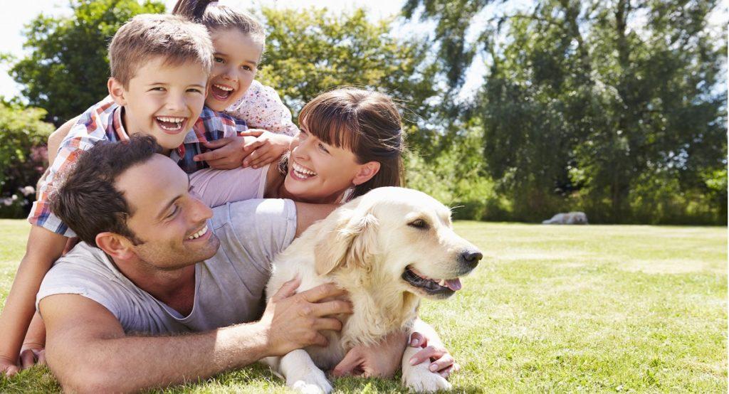 Dónde dejar a tu perro en vacaciones - post 1