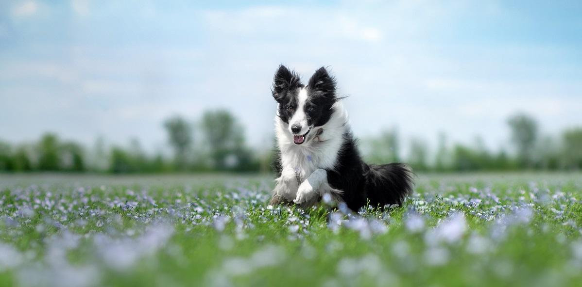 Vuelta a la rutina de los perros después de las vacaciones (campo)