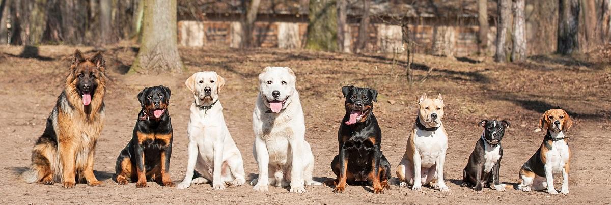 Grupo de perros en obediencia