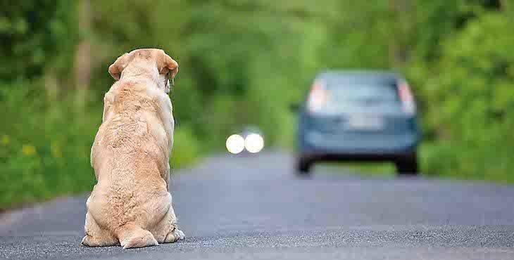 Perro en adopción 1 - Perro abandonado en la carretera