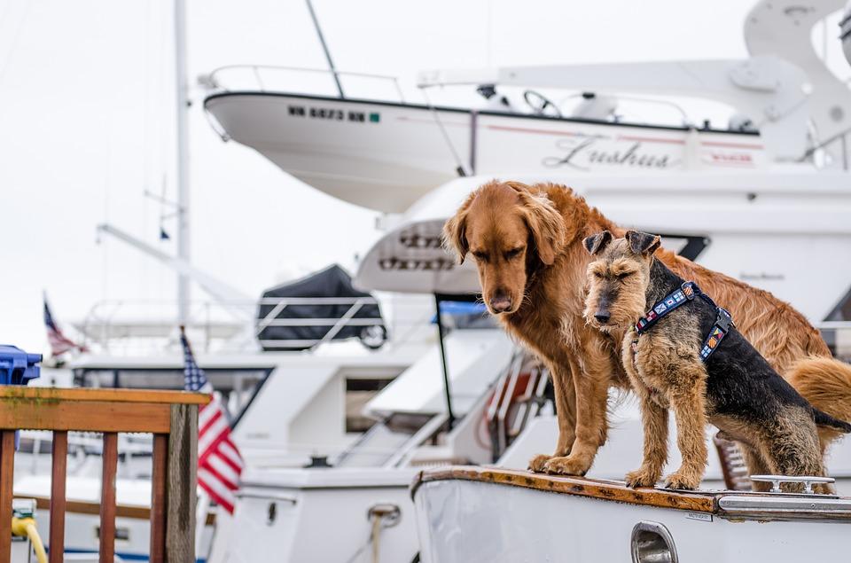 Viajar con tu perro en barco