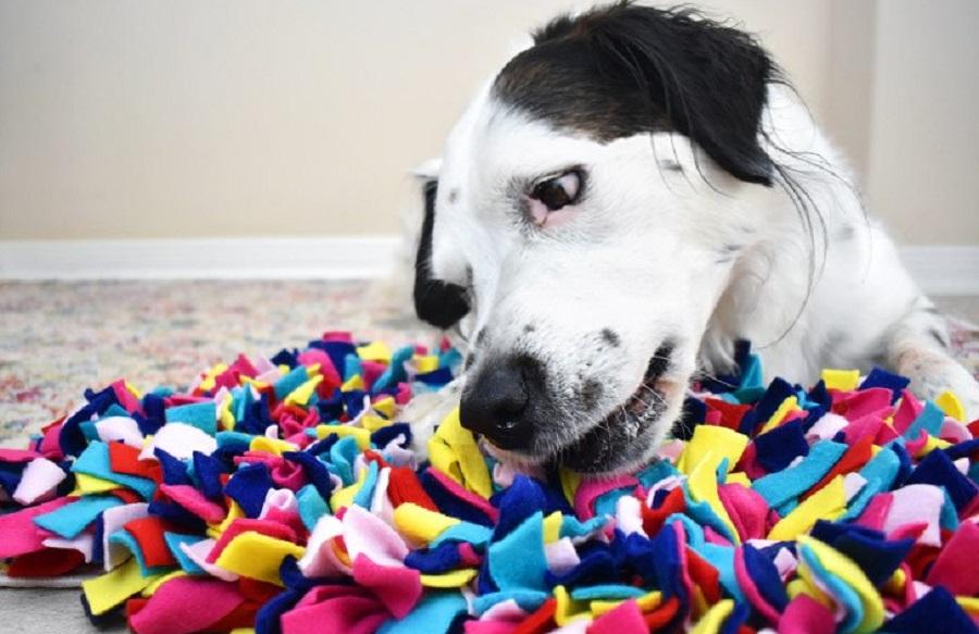 snuffle-mat-alfombra-olfato-diy-2