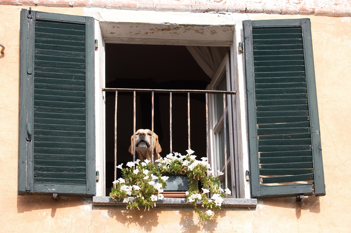 Perro en la ventana, alojamiento con perro por España (1)