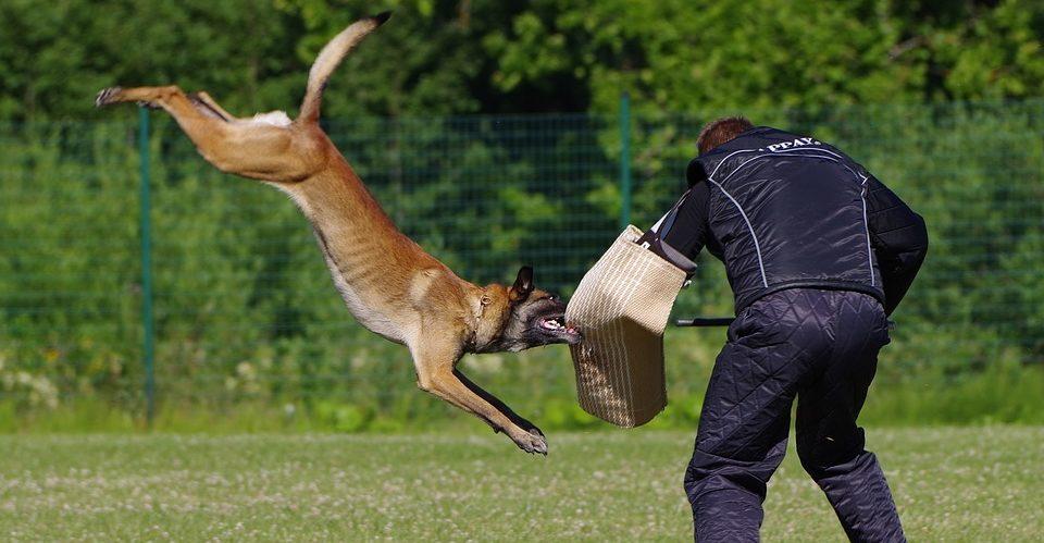 Ataque de un perro - Manga